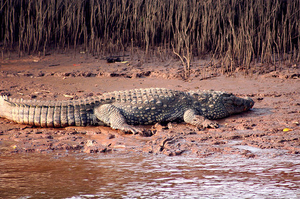 Crocodile spot yacht cruise